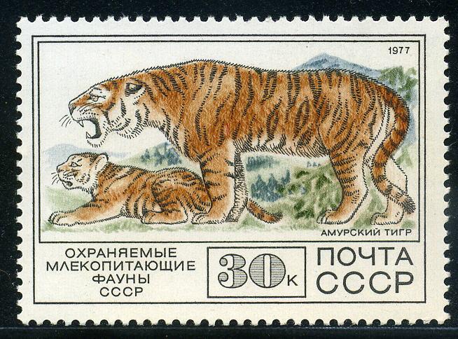 URRS tigre